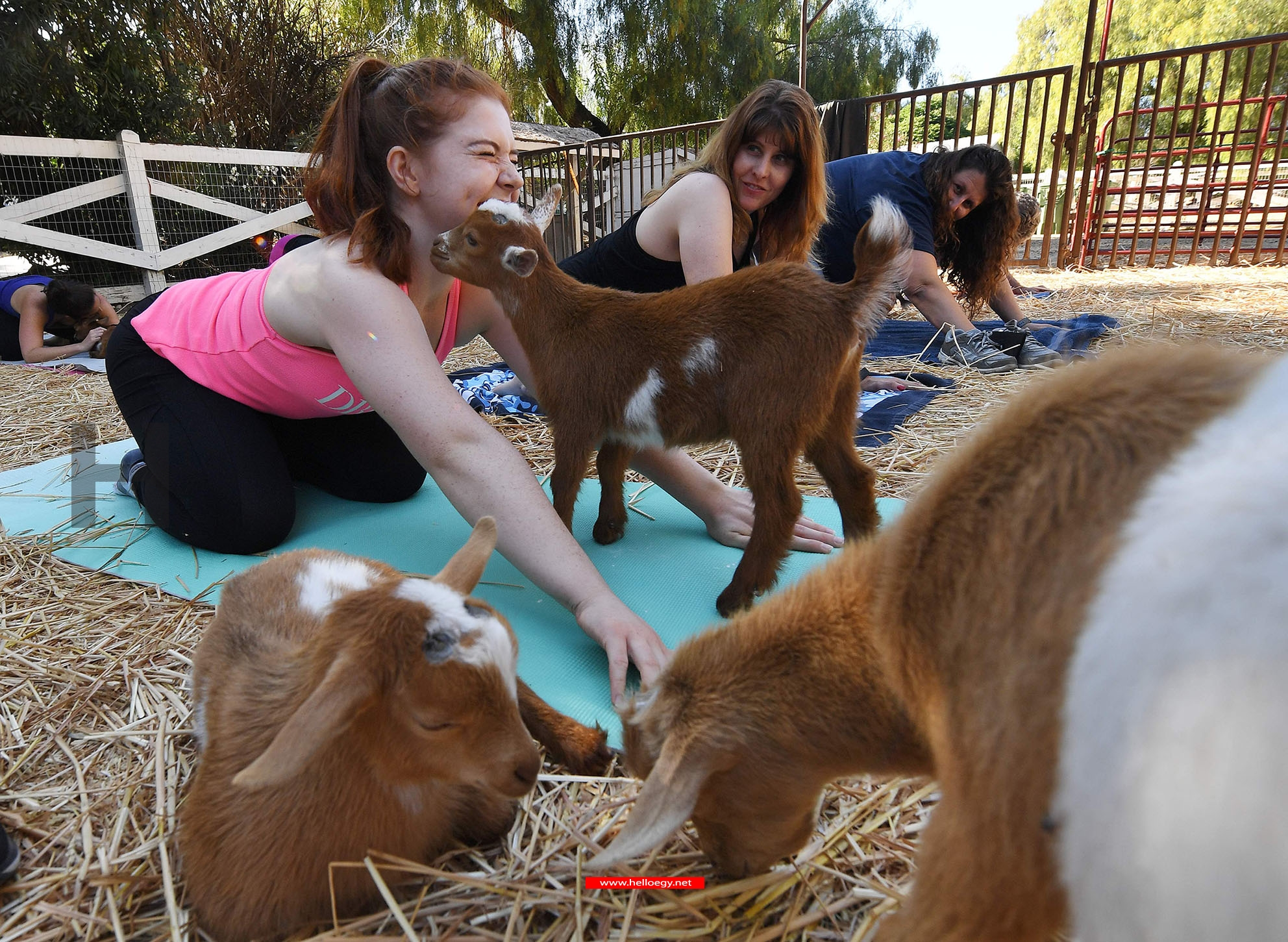 Stephanie Allis struggling to maintain her concentration as a baby goat gets close during a
